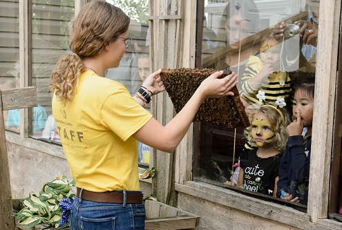 Summer Camps at Honeybee Centre